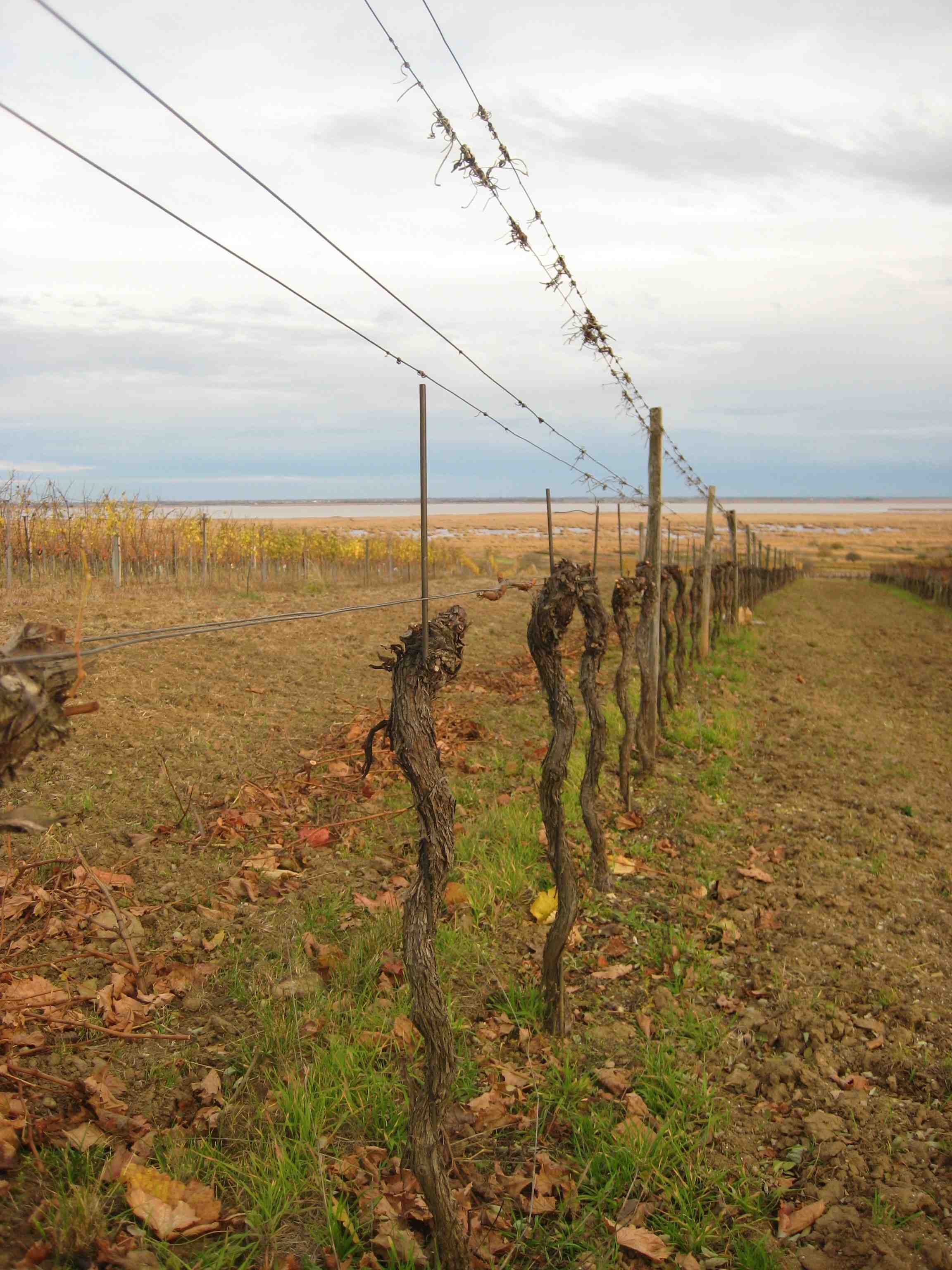 Das Ende eines Weingartens
