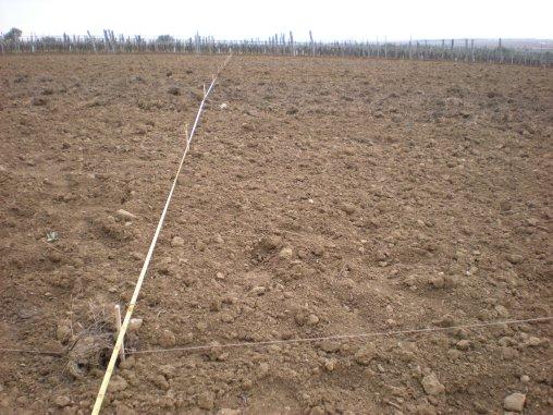 Ausstecken eines neuen Weingartens