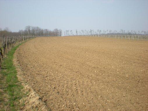 Die letzte Bodenvorbereitung vor der Pflanzung