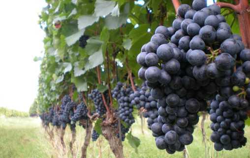 Faszination Wein