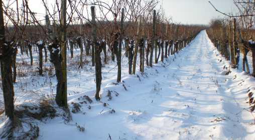 Winterlandschaft bearbeitet