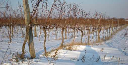 Birnheide im Winter bearbeitet 2 k