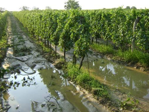 Ein nasser Juli 2