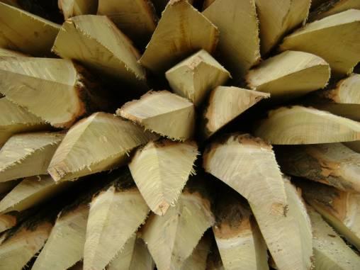 Holzpfähle1 komprimiert